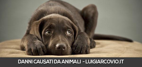 danni causati da animali domestici o selvatici